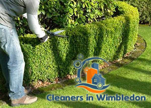 Hedge Trimming Wimbledon